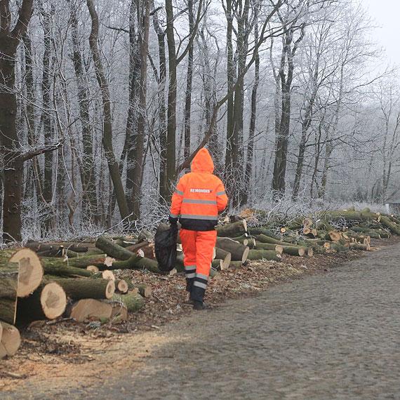 Kolejna wielka wycinka! Pod piłę pójdzie prawie 200 drzew! Czym mieszkańcy będą oddychać?