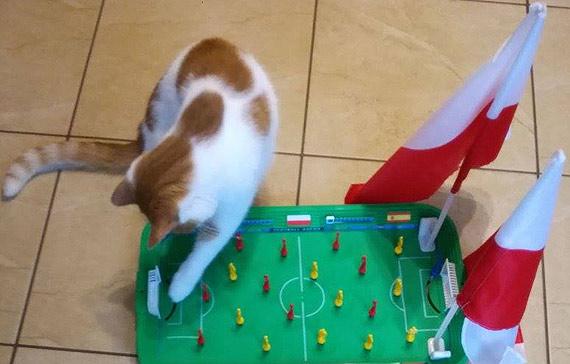 Kitek twierdzi, że Polska wygra! Czy kot naszej Czytelniczki ma rację?