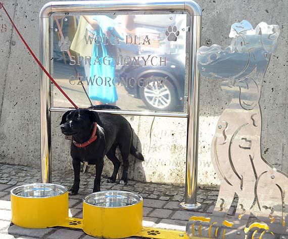 Miejskie poidełka dla psów jednak istnieją! Po trzech miesiącach od publicznej prezentacji projektu pierwsze poidełka pojawiły się w centrum
