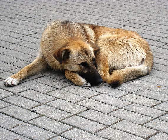 Opieka weterynaryjna nad bezdomnymi zwierzętami