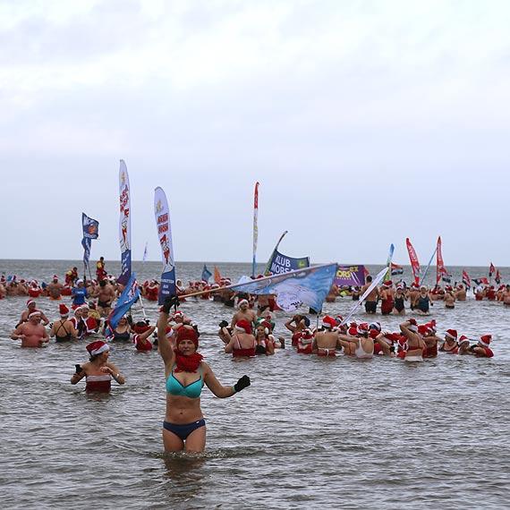 Setki morsów szalało w wodzie i na plaży. Zobacz film!