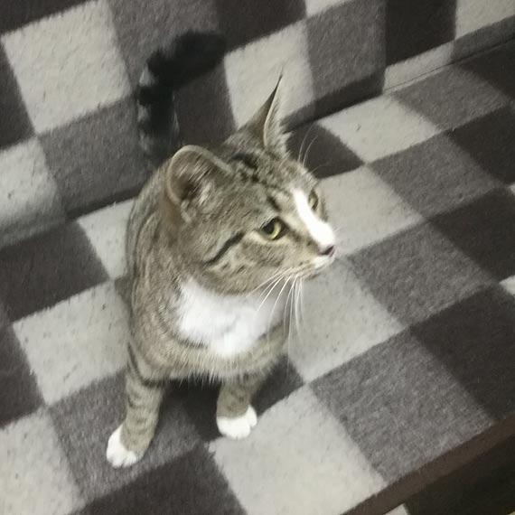 Znaleziony kotek czeka u cumownika