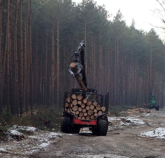 Ruszyły wycinki drzew na drodze wspomagającej Niedźwiedź-Zdunowo