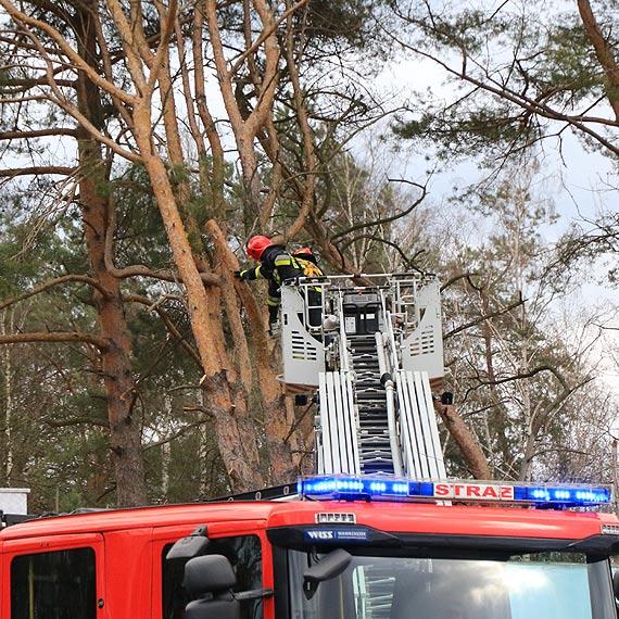 Silny wiatr uszkodził drzewo. Trzeba było wezwać strażaków