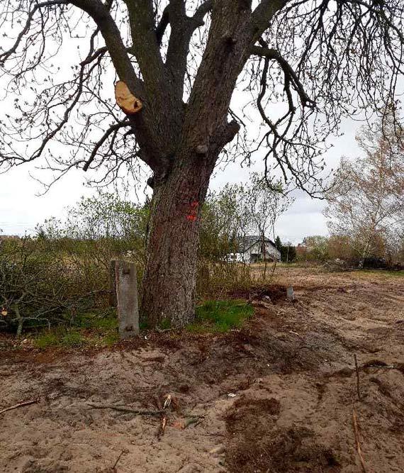 Kto usuwa drzewa rosnące przy ulicy Ogrodowej?