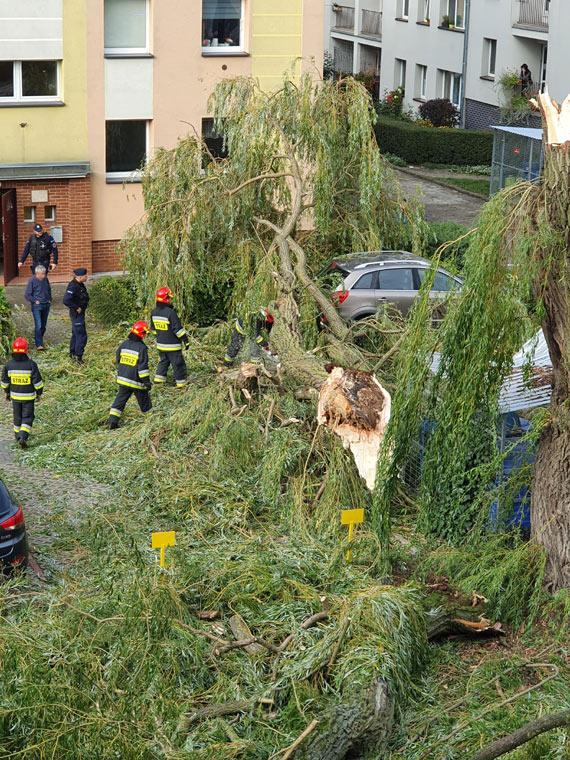 Na osiedlu runęło ogromne drzewo! Zniszczyło dwa samochody