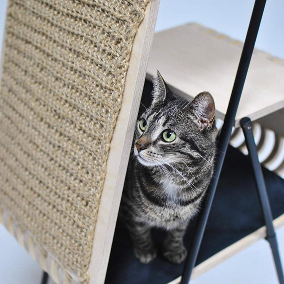 Zaprojektowała mebel dla kota. Studentka ZUT-u w finale konkursu na Najlepszy Dyplom FONT nie czcionka 2019