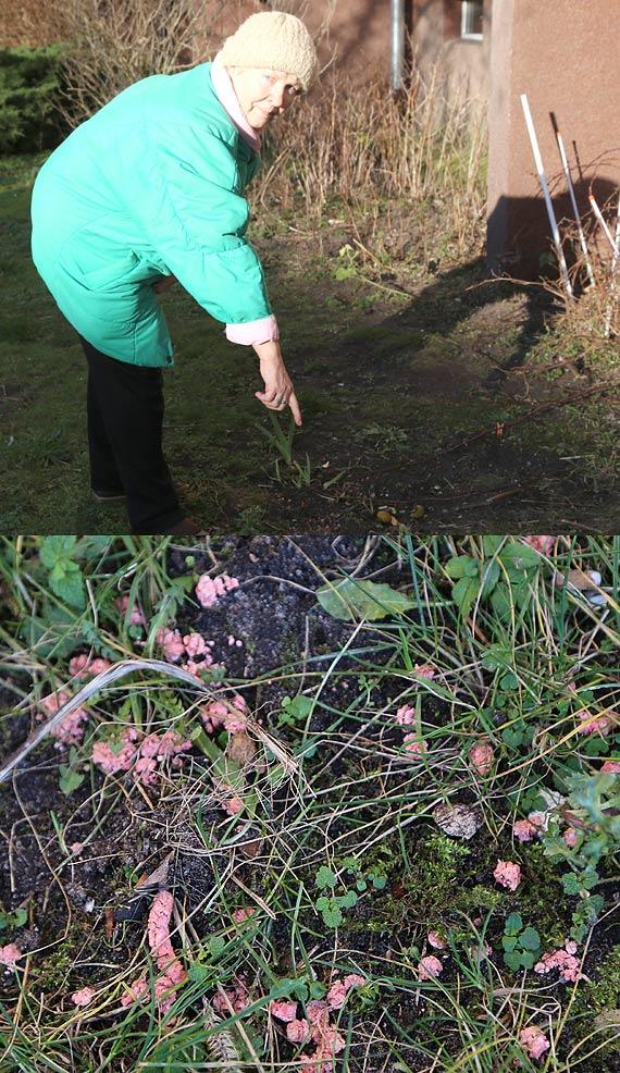 Mieszkanka: Ktoś rozsypał trutkę na trawnik! Trzymajcie psy na smyczy!