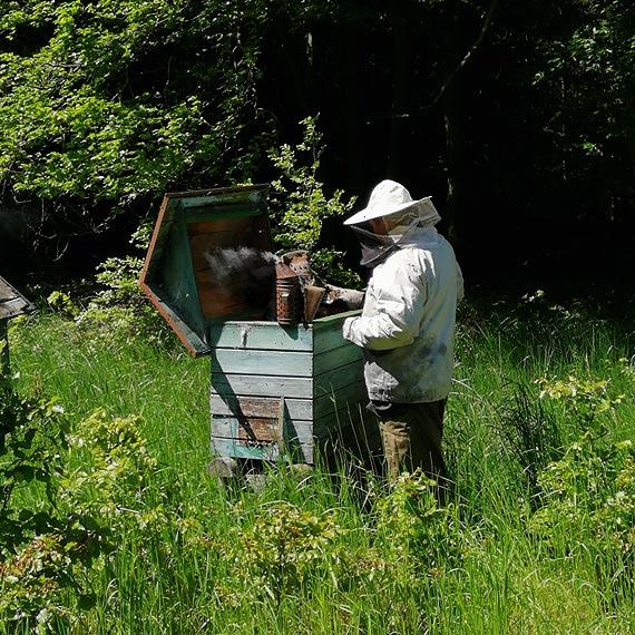 Leśnicy dbają. Światowy Dzień Pszczół