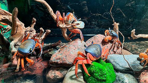Nowi mieszkańcy w Muzeum Rybołówstwa Morskiego